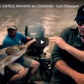 Carpe de Louisiane